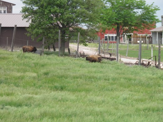 The buffalo pasture adjacent to the store.